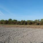 Doñana en otoño